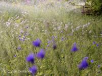 Idée de Sortie Badefols sur Dordogne Balade botanique
