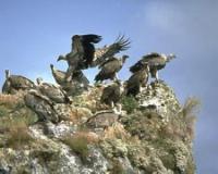 Idée de Sortie Mostuéjouls Ligue pour la protection des oiseaux