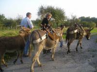 Idée de Sortie L'Échelle Randonnée avec des ânes de bât - Liart