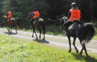 Idée de Sortie Bossus lès Rumigny Balades à cheval