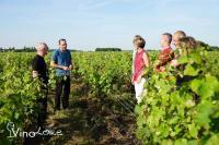 Idée de Sortie Saint Cyr sur Loire Vinoloire Wine-tours
