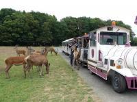 Idée de Sortie Auzouer en Touraine Réserve de Beaumarchais - Les grands gibiers d'élevage en Safari Train