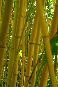 Idée de Sortie Esvres Arboretum de la Martinière