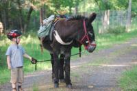 Idée de Sortie Contres Les Ânes de Madame - Balades et randonnées pédestres avec un âne