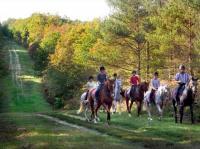 Idée de Sortie Luynes L'Alezane - enseignement équitation de loisirs et fédérale