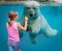 Idée de Sortie Pays de la Loire Zoo de la Flèche