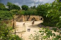 Idée de Sortie Pays de la Loire Bioparc - Zoo de Doué-la-Fontaine