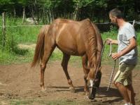Idée de Sortie Saint Gaultier L'homme aux 50 chevaux - ANNULÉ