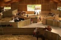 Idée de Sortie Loiret Centre Equestre Poney Club d'Orléans-la-Source