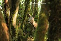 Idée de Sortie Indre Domaine de Bellechasse - Parcours nature tir à l'arc