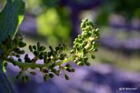 Idée de Sortie Bergerac 2B Wine Not-