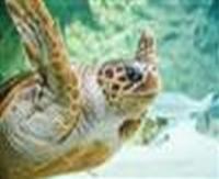 Idée de Sortie Biarritz Aquarium de Biarritz