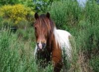 Idée de Sortie Montaut Centre Equestre de la Cavale
