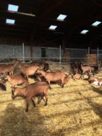 Idée de Sortie Latresne La Ferme aux Chèvres