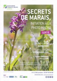 Idée de Sortie Lixheim SORTIE NATURE : SECRETS DE MARAIS ET PHOTO MACRO