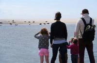 Idée de Sortie Somme A la rencontre des phoques