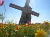 Idée de Sortie Dosches Journées Européennes des Moulins et du Patrimoine meulier