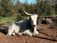 Idée de Sortie Languedoc Roussillon Parc animalier Le Theil