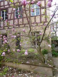 gite Strasbourg Appartement La Cour Finkwiller