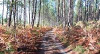 gite Soorts Hossegor Les Hébergements Nature et Bien-être