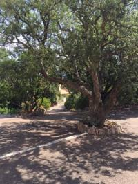 tourisme Olmeto villa saint joseph