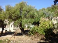 Location de vacances Corse Location de Vacances A CASA DI L'ALIVU