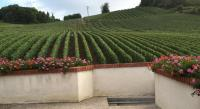 Gîte Champagne Ardenne Gîte La Loge Du Vigneron