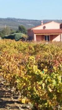 tourisme Gémenos Gîte Au Milieu des Vignes