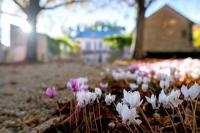 Gîte Saint Julien l'Ars Gîte Jolie petite maison en pierre