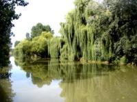 La Maison de la Taillée-la-riviere