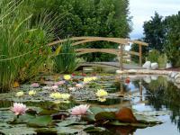 Jardin La Chapelle de Guinchay Les Jardins Aquatiques Et Son Musee