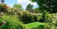 Le Jardin D'En Galinou-Une-allee-de-roses-grimpantes