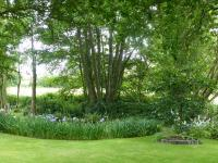 Jardin de La Moisonnais-Iris-ensata-au-bord-de-la-mare