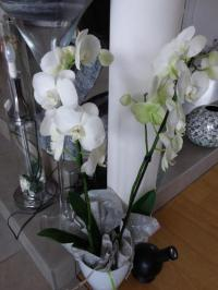 gite Ambrières les Vallées L'Orchidée