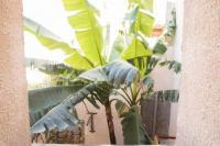 gite Lamalou les Bains A l'ombre du bananier