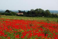 gite Agde Domaine Saint Ferreol