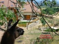 gite Juré House La bruyère aux lamas