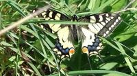 Gîte Allier Gîte Les Papillons