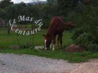 gite Sainte Maxime Le Mas du Centaure