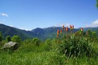 Location de vacances Camurac Location de Vacances Chalets les gentianes