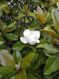 Résidence de Vacances Longroy Résidence de Vacances Magnolia