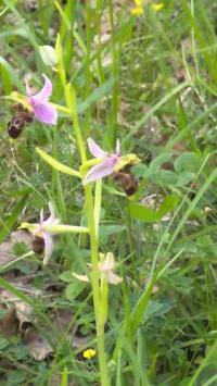Gîte Tarn et Garonne Gîte Les Orchidées
