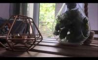 Chambre d'Hôtes Argenteuil 10 min de Paris St Lazare vue jardin sans frais de ménage