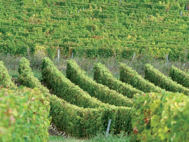 Visites secrètes : viticole de Menetou Salon-Credit-Domaine-chavet-2