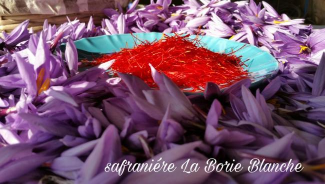 Safranière La Borie Blanche-Credit-Safraniere-La-Borie-Blanche