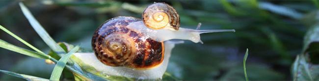 Aquitaine Escargots-Credit-©-Aquitaine-Escargots
