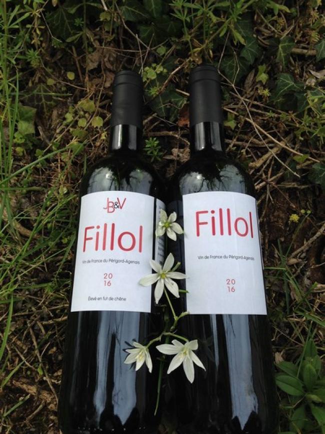 Domaine Fillol (vin éco-logique)-Credit-Vigie