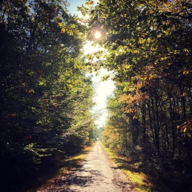Forêt domaniale de Châteauroux-Credit-Alexis-Rousseau-Jouhennet