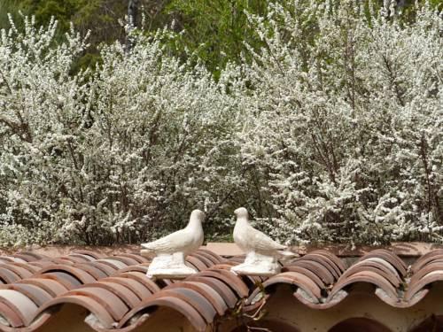Pigeonnier des Banons-Pigeonnier-des-Banons
