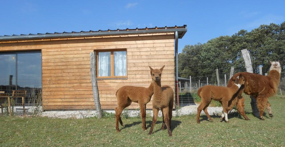 Gîte de l'élevage des alpagas de la Tille-gite-3-etoiles-5-personnes